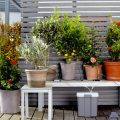 Kit per innaffiare le piante Gardena (photo credit www.gardena.com)