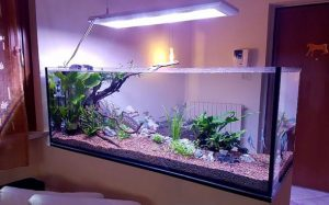 Acquario domestico (photo credit redseashop.com)