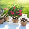 Concime NPK per orto e giardino