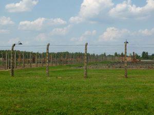 Offendicula: reti elettrificate ad Auschwitz©