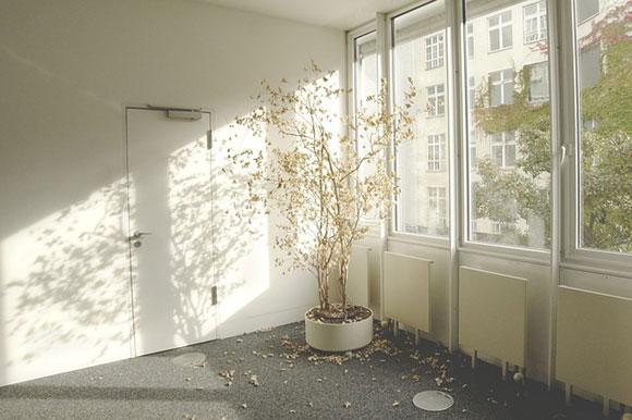 Piante da appartamento (photo credit pixabay.com)